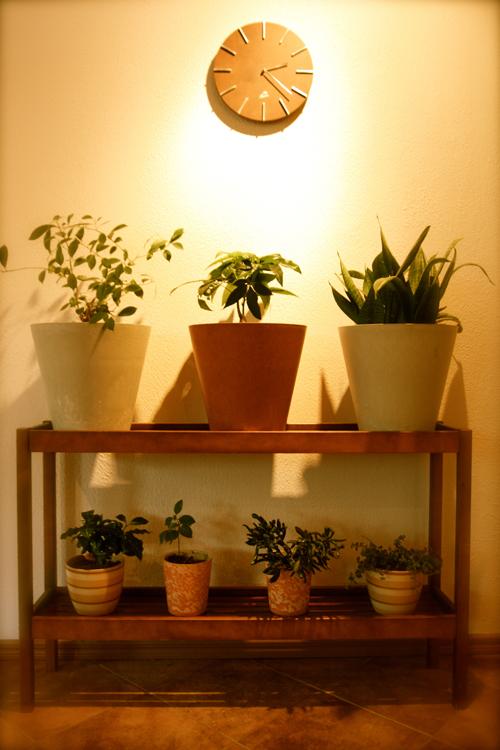 Kukkapöytä – miian ajatuksia