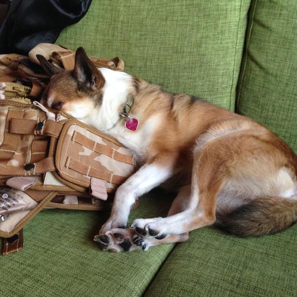Deea löysi sohvalta kiva nukkumispaikan, saa tunkea päänsä piiloon. Siinä ne nytkin nukkuu, pää on vaan vielä syvemmällä. :D Hassu tyyppi!