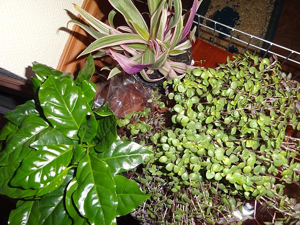 Uusi kolmikko liittyi kasviperheeseen.